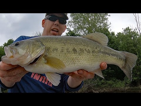 Fishing For Bass With Bluegill - Catching Bass With Live Bait