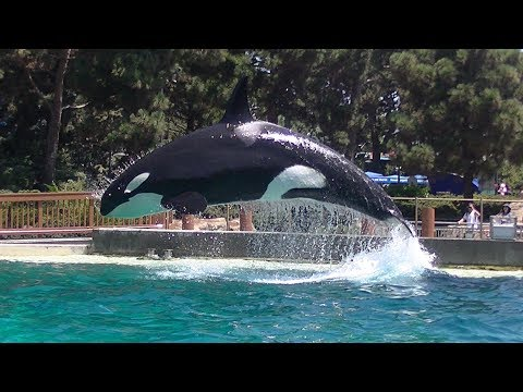 Dine With Corky's Family - August 23, 2019 - SeaWorld San Diego
