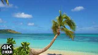 Relaxing 2 Hour 4K Video: Tropical Beach, Palm Tree, Blue Sky and White Sand (Real Time)