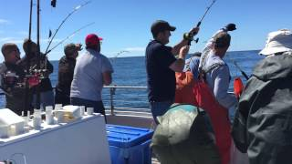 Epic 10 way tuna hookup aboard the Tacklebuster (Dockside Charters) in Depoe Bay, OR
