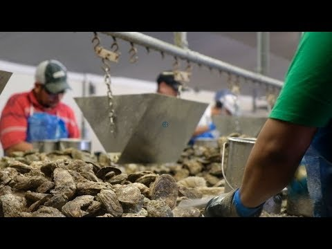 VA Seafood Company More Productive with Imports
