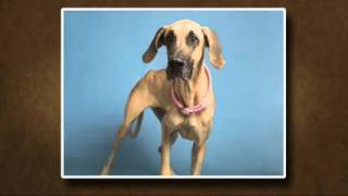 Pets on Parade - 4/2/16 - Adoptable pets (part 1)