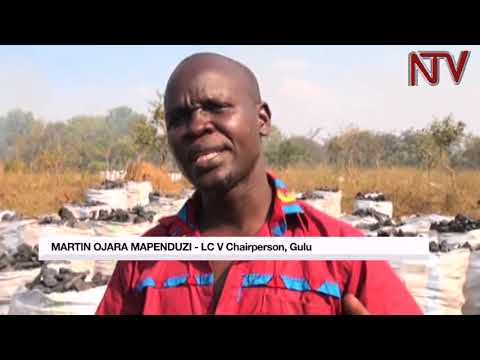 Gulu LC 5 boss cains hardsmen as he launches operation to protect fragile environment