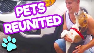 The Life of Pets - Try Not To Smile Challenge | Pets Reuniting With Their Owners | #thatpetlife thumbnail