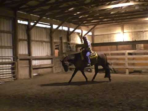 """Potential Subsidy """"Fred"""". AQHA 2008 16.2 H. Hunter Under Saddle Gelding. Suitable for any level."""