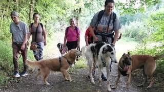 Educa Patte - Marche cani nocturne du 20 août 2021