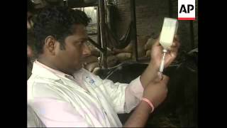 Vaccination programme to stop spread of disease in cattle