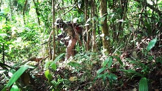 NEKAT..!! Berburu Sendirian Ke Hutan