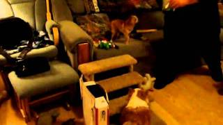 Cavalier King Charles Spaniels And Chihuahuas Merry Christmas 2010