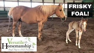 Frisky Foals First Adventure // Versatile Horsemanship
