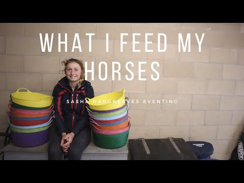 What I Feed My Horses