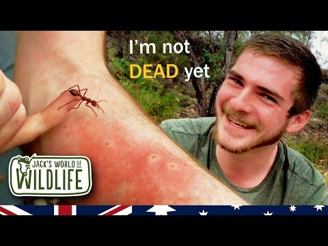 The Most VENOMOUS ANT In The World And I GOT STUNG!!   | Australia Series |