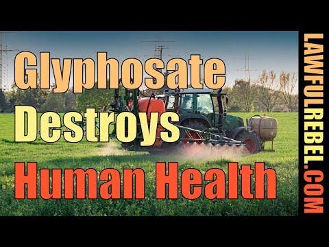 Glyphosate Destroys Health - With Dr Stephanie Seneff Of MIT