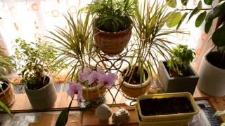 Зимний сад в доме.(Зимний сад в эркере нашего дома. Зимой немного обогревается теплым полом, а летом притеняю светонепроницае..., 2016-12-01T11:01:38.000Z)
