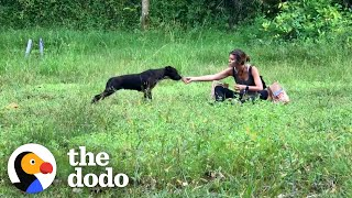 It Took Months To Catch This Stray Dog | The Dodo Faith = Restored