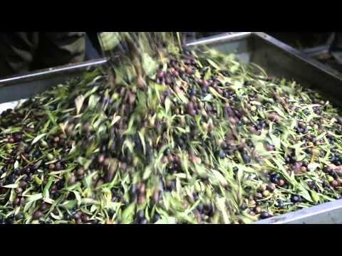 From Grove to Market Program in Palestine