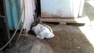 待ってろ今助けるから!穴を掘って猫を救出しようとするウサギ