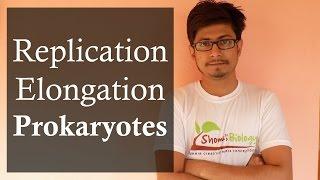 DNA replication in prokaryotes 2 | Prokaryotic DNA replication elongation