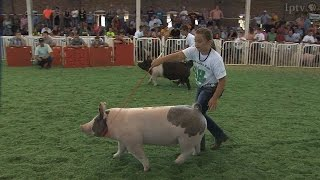 4H Swine  | Iowa State Fair 2014