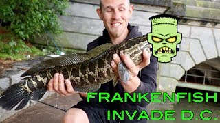 FRANKENFISH HAVE INFESTED WASHINGTON D.C.!!! (INSANELY TRICKY FISH)
