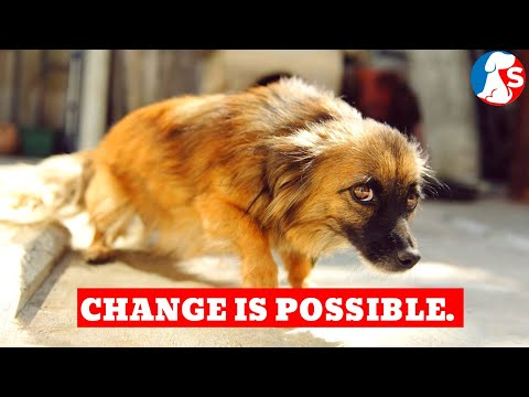 How To Train An Abused Dog To Change Its Behaviour