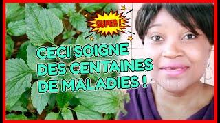 JUSTE TROIS GOUTES DE CETTE PLANTE NATURELLE  ET TU VERRAS LE MIRACLE
