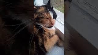 Приколы про котов🐈ржач девочка учит кота, что дружба это чудо😂😂