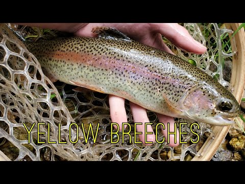 Trout Fishing Yellow Breeches Creek