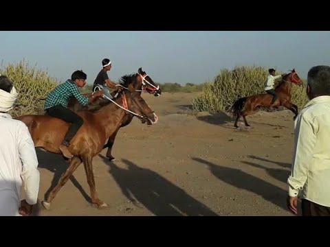Horse Race in Serdi kutch 2018 : कच्छ की सबसे बड़ी घोड़ो की रेस