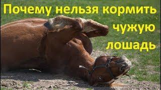 Не угощайте чужих лошадей!