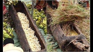 Bóc vỏ 500 quả chuối cho vào thân gỗ rỗng ,1 tháng sau khiến cả thế giới đổ xô về thử