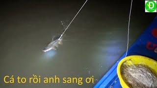 12  Giăng câu cá tra hôm nay trúng đậm - Cá tra khủng l Fishing