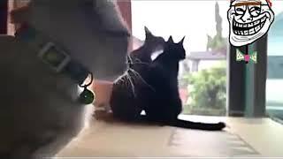 Funny cat video