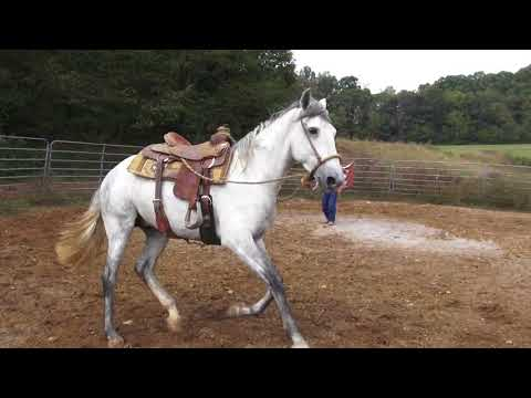 Working in a bosal ,plus first canter work