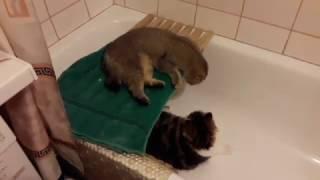 �������� ���� Марта и Басик ( забавы в ванной ) ������