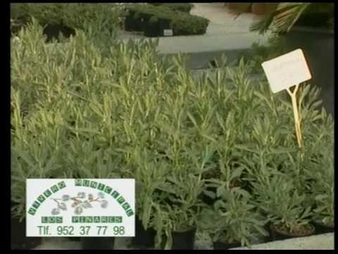 Plantas arom ticas mediterr neas 1 parte de 2 youtube for Jardinera plantas aromaticas