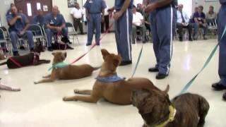 One Short: Prison Pups 'n Pals