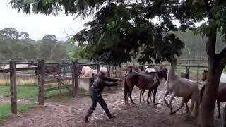 Cavalos que estacam no cabresto! Veja o que fazer e o que não fazer para isso acontecer...