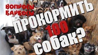 Как прокормить больше 100 собак?
