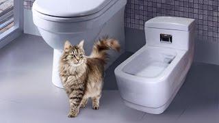 Запах кошачьего туалета - туалет без запаха это реально?