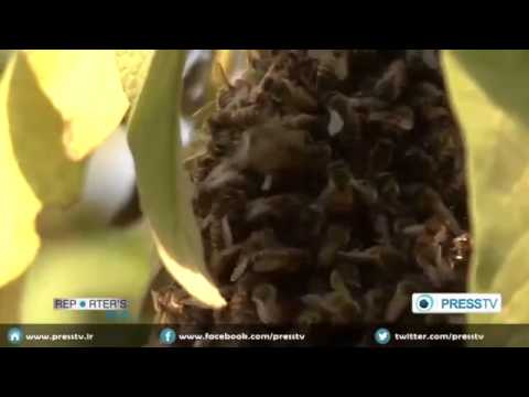 2384 economics 027 001 Press TV Reporter's File   Beekeeping in Uganda