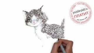Нарисованные карандашом коты  Как легко и быстро нарисовать кота с пушистым хвостом за 24 секунды