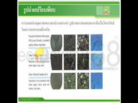 Liquid Chlorophy,Yaeyama Chlorella,Organic Spirulina