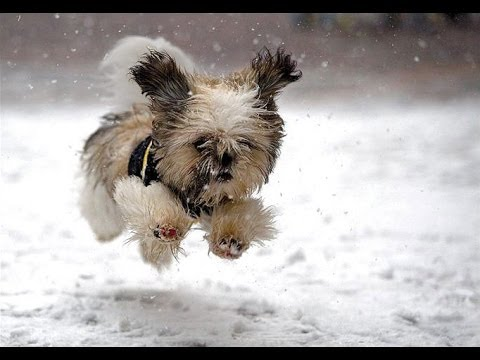 """dogs-playing-in-snow-compilation""-