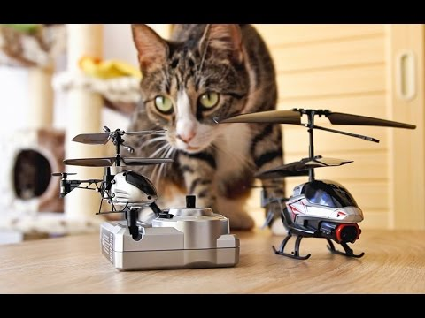 Cats Vs World's Smallest RC Helicopter
