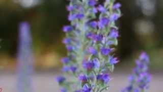 Копия видео Природа Крыма(степной Крым, начало июня., 2013-06-15T15:50:53.000Z)