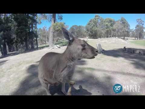 Ballarat Wildlife Park, Victoria, Australia