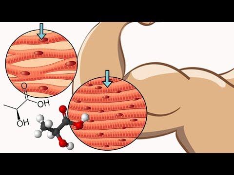 Как засушиться без потери мышечной массы