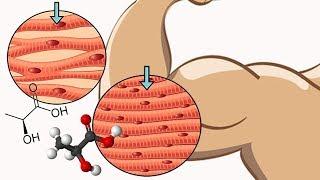 Как не СЖЕЧЬ мышцы на сушке если ты НАТУРАЛ