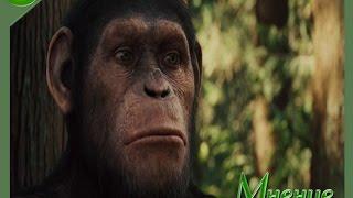 Восстание планеты обезьян [Обзор,Мнение]